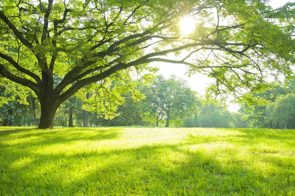 自然環境の改善に貢献いたします!