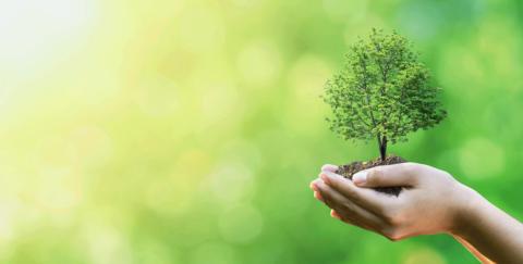 剪定・伐採を行った樹木の処分をお考えですか?